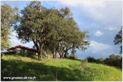 Ateliers de l'automne 2015 à l'Oasis des 3 Chênes (Oasis dos 3 sobreiros – Portugal)