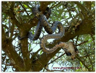 Leçon de philosophie du serpent