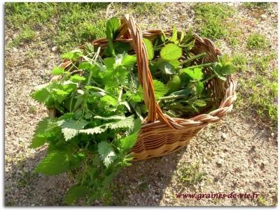 Plantes médicinales, les miracles de l'ortie