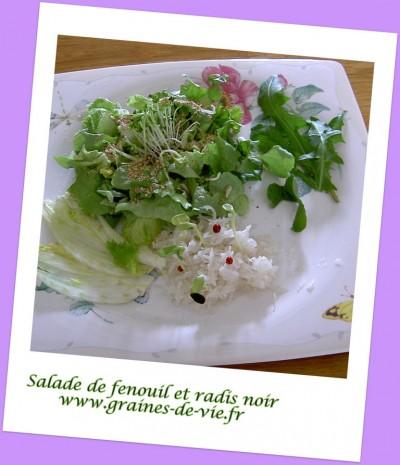 Salade verte, de fenouil et de radis noir