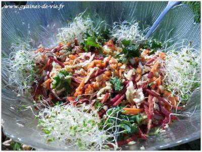 Salade hivernale de chou frisé