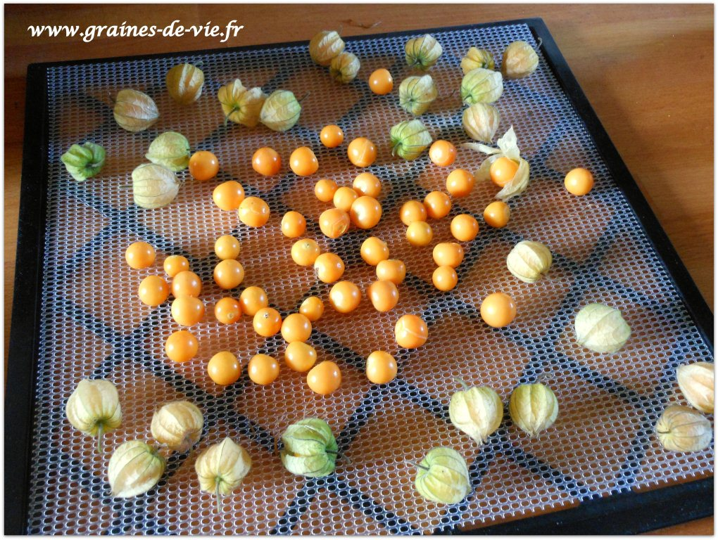 Physalis, un super aliment