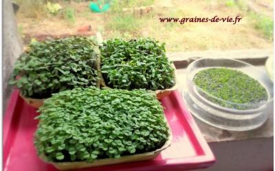 Conférence sur les graines germées