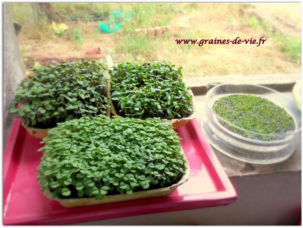 Les graines germ es graines de vie - Faire germer des graines de potimarron ...
