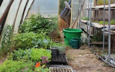 Une serre permaculturelle