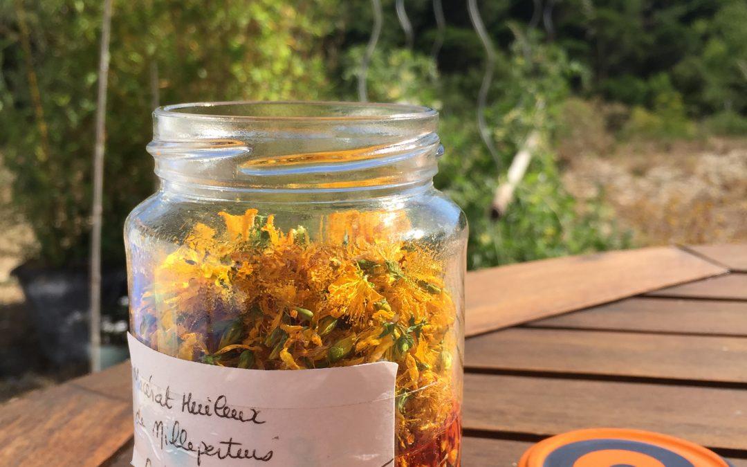 Découvrez comment réaliser votre huile de millepertuis maison