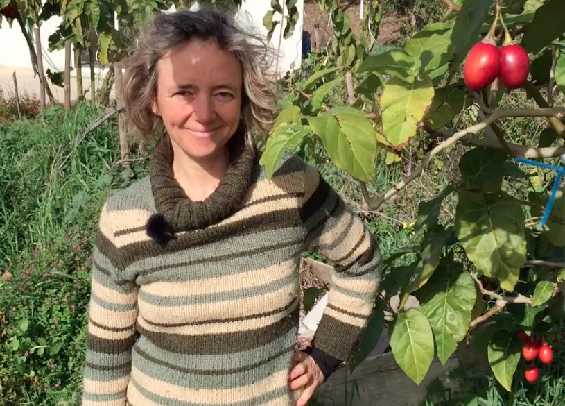 Le tamarillo, un fruit parfait pour la Permaculture en zone méditerranéenne