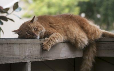 Améliorer votre sommeil avec les méthodes naturelles