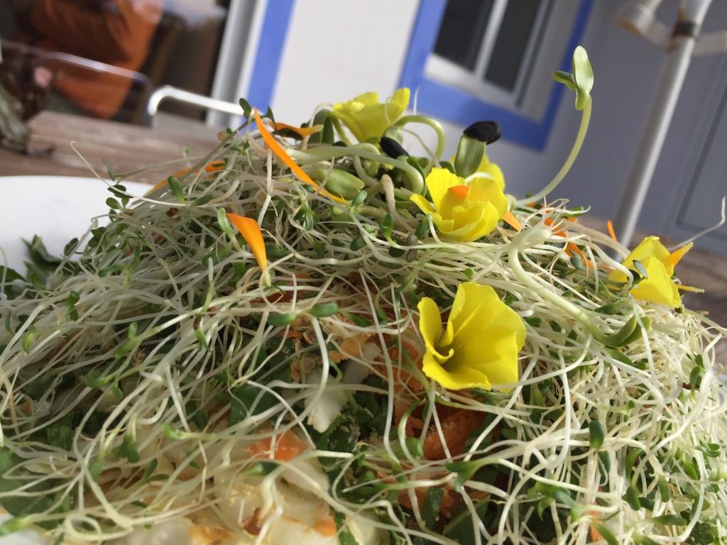 Salade viva Choucamer