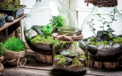 La résilience écologique, ou comment vous préserver face aux évolutions de la société