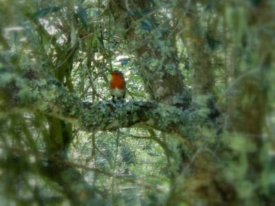 Nos visiteurs à pattes, ailes ou autre… partie 1 – les oiseaux