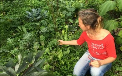Les plantes sauvages ou le pays des merveilles sous vos pieds
