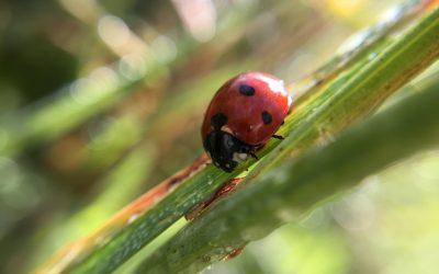 Renouer avec la Nature en découvrant les plantes sauvages