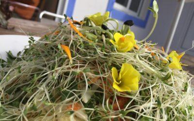 Salade Viva Choucamer ! préparée en 15 minutes chrono