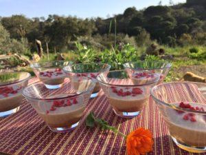 Crème dessert Prélude vanillé et chat qui passe à droite